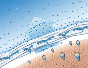 temperature regulation - evaporation