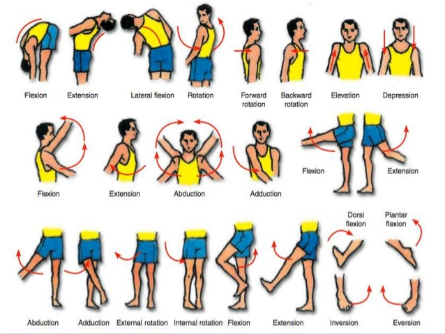 Image result for joint movements terms